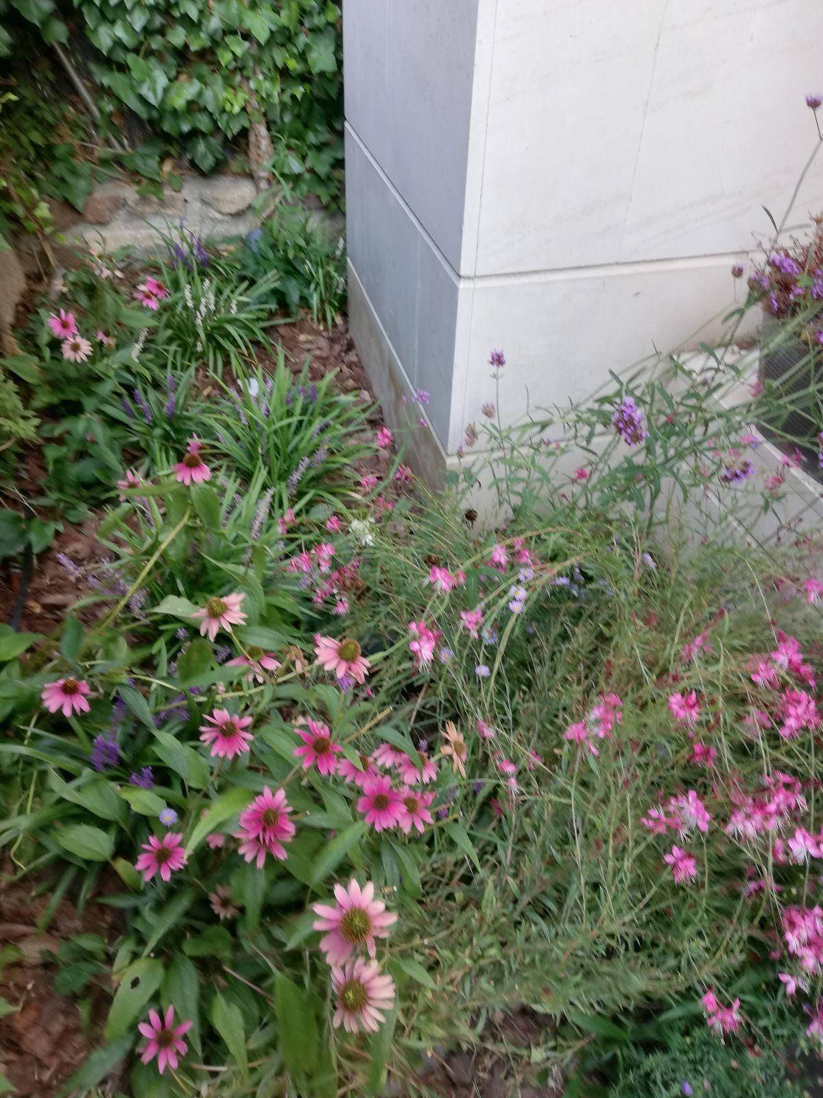Proyectos Vegetación