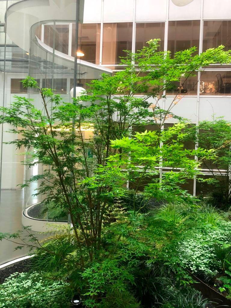 plantas (2)