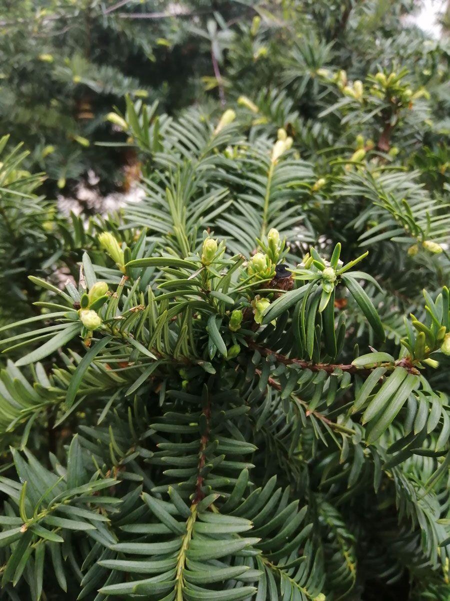 plantas (3)
