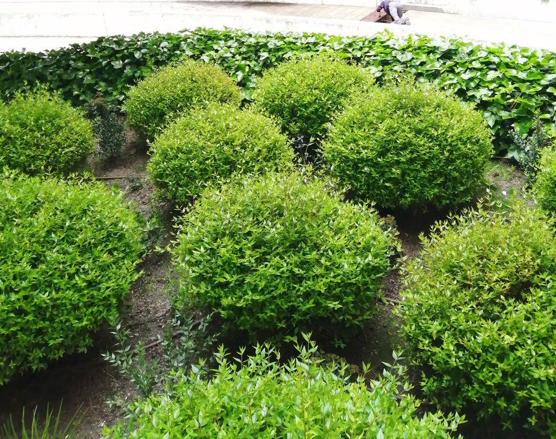 plantas (4)