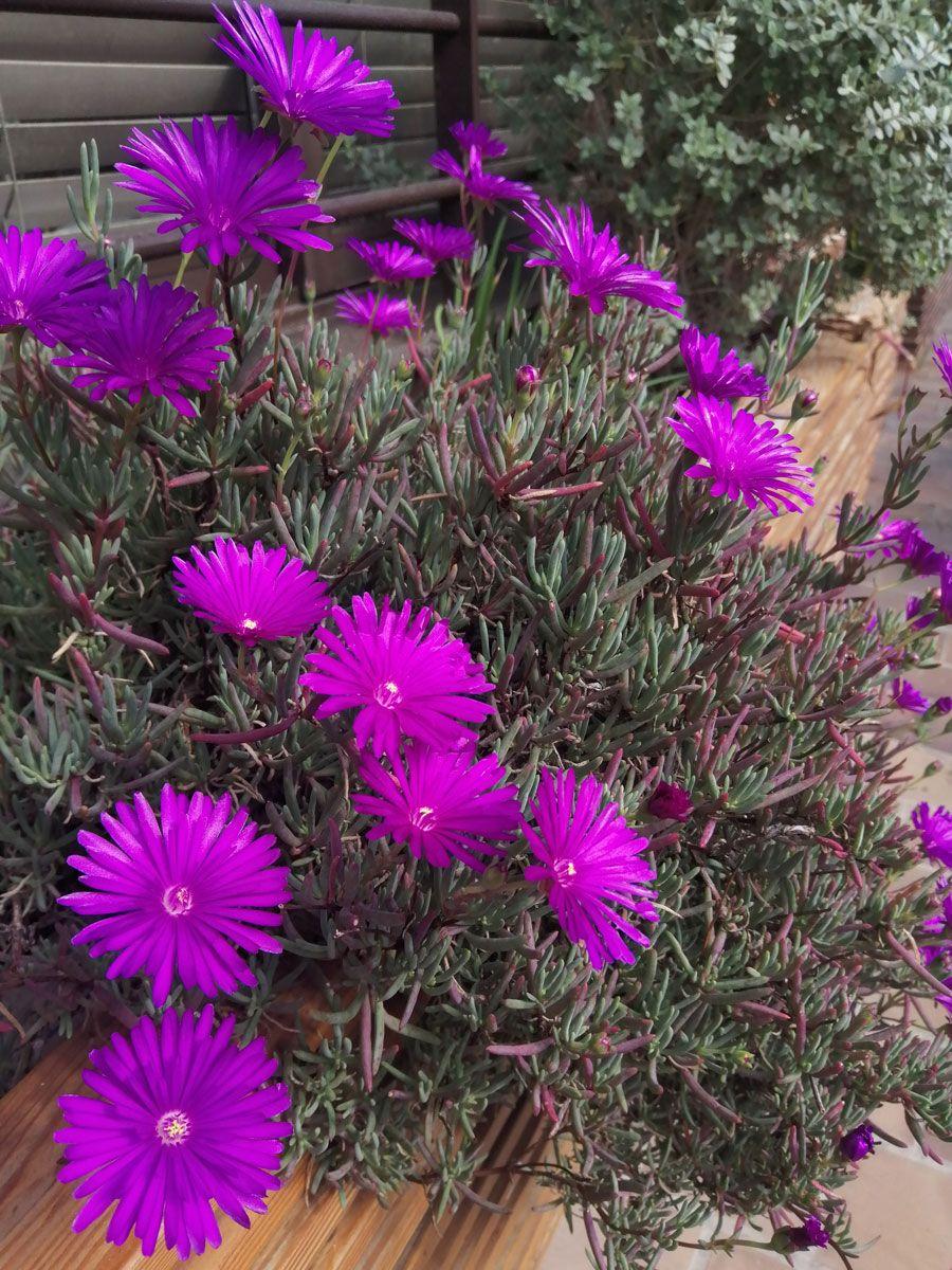 plantas (7)