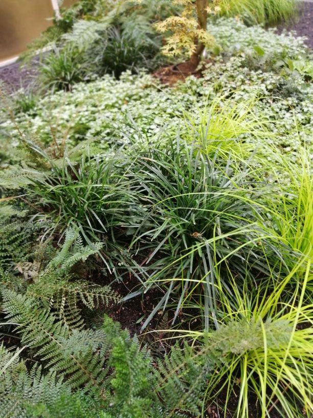 plantas (9)