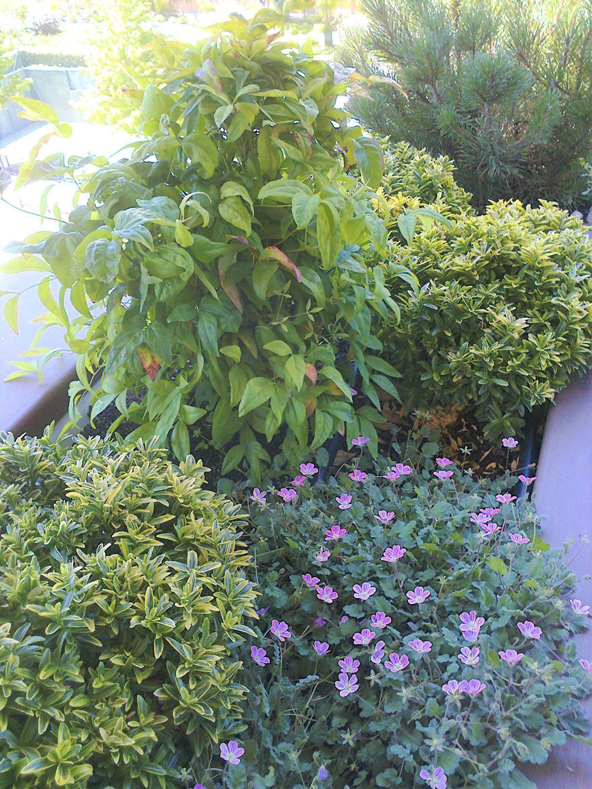terrazas-y-patios (11)