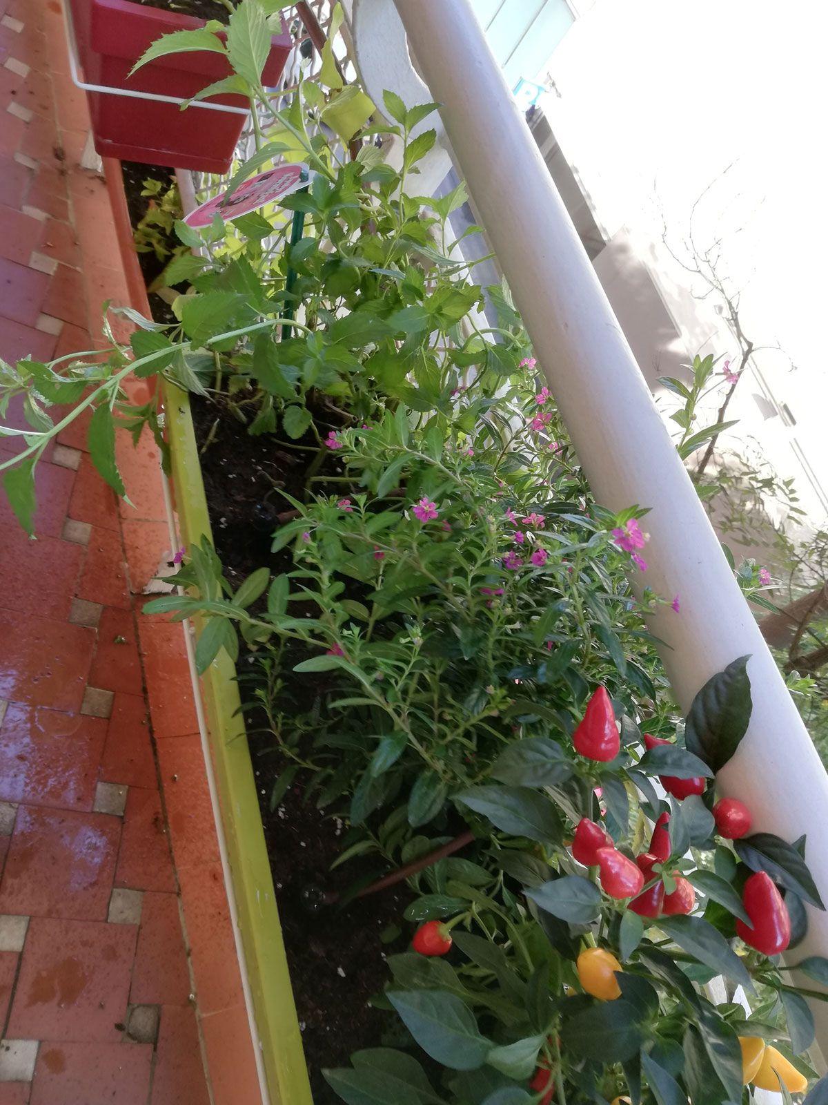 terrazas-y-patios (8)