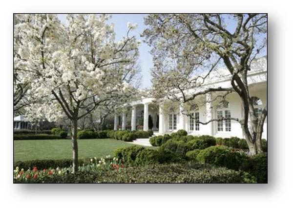 manzanos-silvestres-en-floración